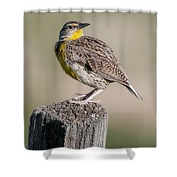 Shower Curtain featuring the photograph Western Meadowlark by Gary Lengyel