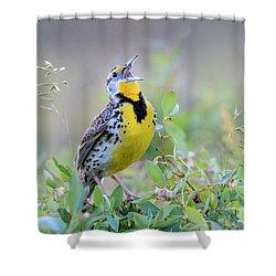 Western Meadowlark Shower Curtain by Jack Bell