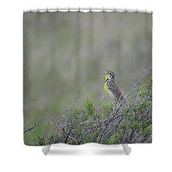 Western Meadowlark Morning Shower Curtain