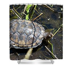 Western Pond Turtle, Actinemys Marmorata Shower Curtain