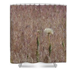 Western Salsify Seed Head Shower Curtain