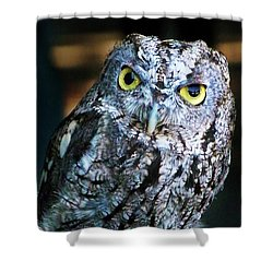 Shower Curtain featuring the photograph Western Screech Owl by Anthony Jones