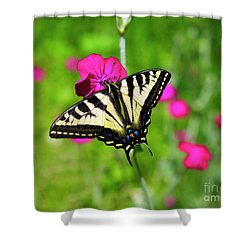Western Tiger Swallowtail Butterfly Shower Curtain