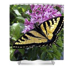 Western Tiger Swallowtail Butterfly Shower Curtain by Daniel Hagerman