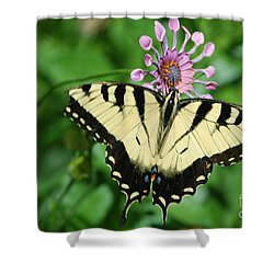 Shower Curtain featuring the photograph Western Tiger Swallowtail by Frank Stallone