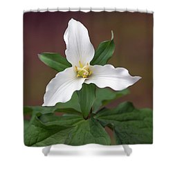 Western Trillium Shower Curtain
