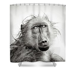 Wet Baboon Portrait Shower Curtain