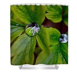 Wet Bleeding Heart Leaves Shower Curtain by Brent L Ander