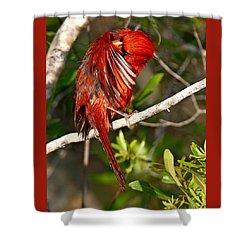 Wet Cardinal Shower Curtain