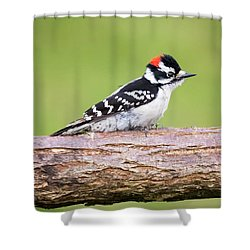 Shower Curtain featuring the photograph Wet Downy Woodpecker  by Ricky L Jones