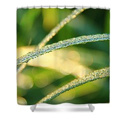 Wet Grass Shower Curtain