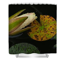 Wet Lily Shower Curtain