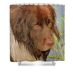 Shower Curtain featuring the photograph Wet Newfie by Debbie Stahre