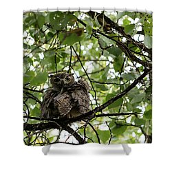 Wet Owl - Wide View Shower Curtain