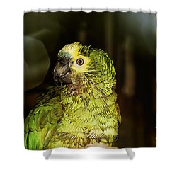 Shower Curtain featuring the photograph Wet Parrot by Melissa Messick