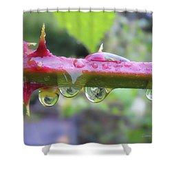 Wet Prick Shower Curtain by Donna Blackhall