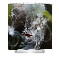 Wet Seed Shower Curtain