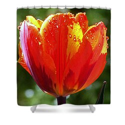 Wet Tulip Shower Curtain