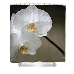 Wet White Orchids Shower Curtain