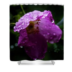 Shower Curtain featuring the photograph Wet Wild Rose by Darcy Michaelchuk