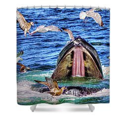 Whale 279 Shower Curtain