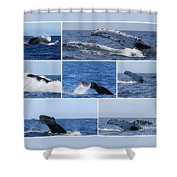 Whale Action Shower Curtain
