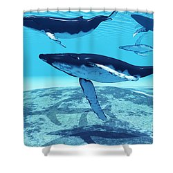 Whale Pod Shower Curtain by Corey Ford
