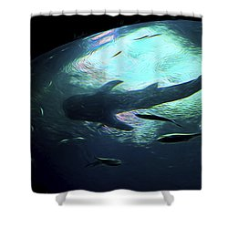 Whale Shark Of The Earth Shower Curtain