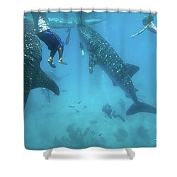 Whale Sharks Shower Curtain