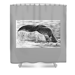 Shower Curtain featuring the drawing Whale Tail by Heidi Kriel