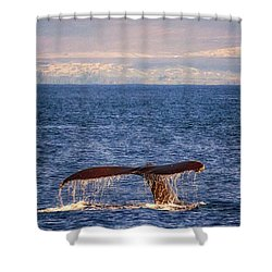 Shower Curtain featuring the photograph Whale Tail by Susan Rissi Tregoning