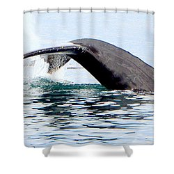 Whale Watch Moss Landing Series 24 Shower Curtain