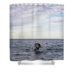 Whale Watching In Canada Shower Curtain by Trace Kittrell