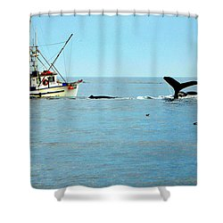 Whale Watching Moss Landing Series 26 Shower Curtain