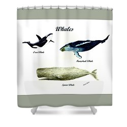 Whales Shower Curtain by Michael Vigliotti