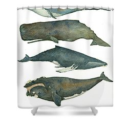 Whales Poster Shower Curtain