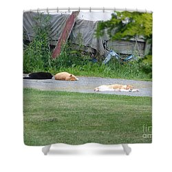 Shower Curtain featuring the photograph What A Day by Donald C Morgan