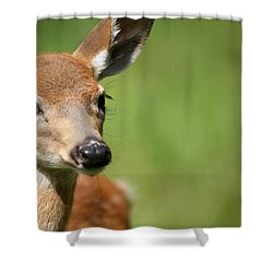 What A Face 1 Shower Curtain by Karol Livote