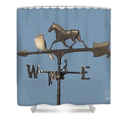 What Did You Say Shower Curtain by Donna Brown