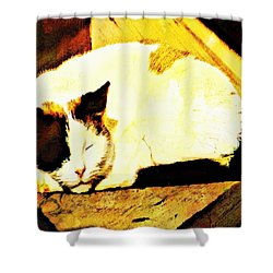 What Do Cats Dream Of Shower Curtain