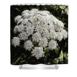 Shower Curtain featuring the photograph What Flower Is This? I Think It's by Mr Photojimsf