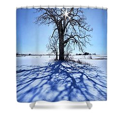 Shower Curtain featuring the photograph What I Am, What I Was, What I Will Be by Phil Koch
