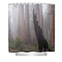 Shower Curtain featuring the photograph What Lurks In The Forest by Peggy Hughes