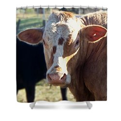 Shower Curtain featuring the photograph What You Lookin' At by Betty Northcutt