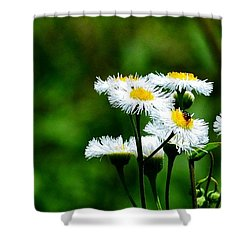Bellis Daisy Shower Curtain