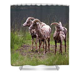 Whats Next Shower Curtain