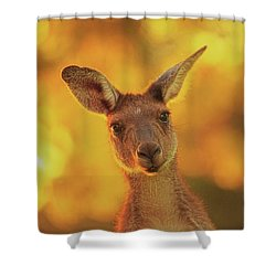 What's Up, Yanchep National Park Shower Curtain