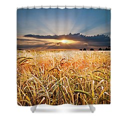 Wheat At Sunset Shower Curtain