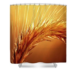 Wheat Close-up Shower Curtain