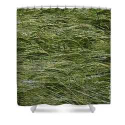 Shower Curtain featuring the photograph Wheat Field by Jean Bernard Roussilhe